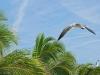 Crazy Gulls