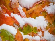Fall-leaves-with-Snow